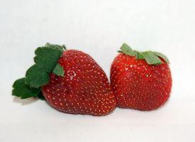 Strawberry Diet