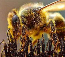 Bihulebetennelse vs. Allergi