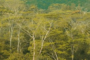 Regnskog planter som brukes i medisin