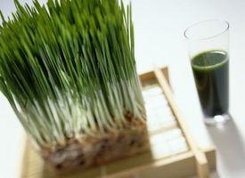 Forholdsregler av Wheatgrass Juice