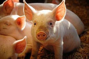 Hvordan unngå svineinfluensa