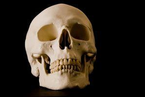 Skull Development i Human Male