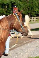 Hvorfor bruke Horse Therapy for Kids med autisme?