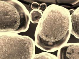 Hva er Polymerer av Lipids?