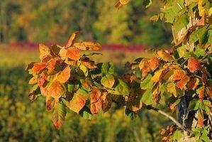Slik fjerner en Poison Ivy utslett med en Hjem Utbedring