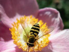 Flying Insekter som stikker mer enn én gang