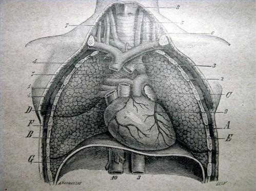 Arginine & Heart Disease