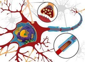 Nevromuskulære sykdommer