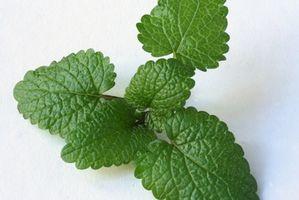 Natural Cures for tilbakevendende forkjølelsessår
