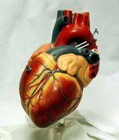 Tegn på hjertesykdom