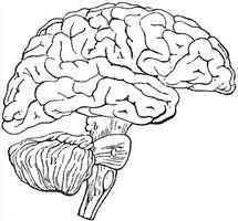 limbiske system medisinering