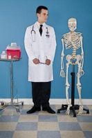 Hvordan studere bein i kroppen