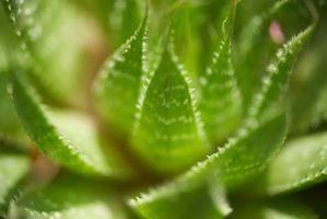 Aloe & Cranberry Juice Cleanse