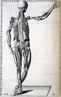 Interkostalrom Nerve Pain