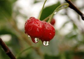 De helsemessige fordeler av Balaton Cherry Juice