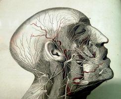Hjernerystelse og hodeskade Instruksjoner for pasienter