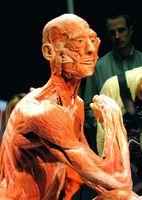 menneskekroppen og organerne