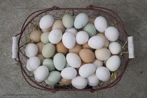 Egg Hvit Calorie & Protein Informasjon