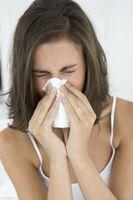 Hvordan holde huset Allergy Free