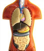 Friske lunger etter røykeslutt
