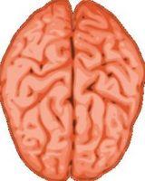Hvordan kan et hjerneslag påvirker hjernen?