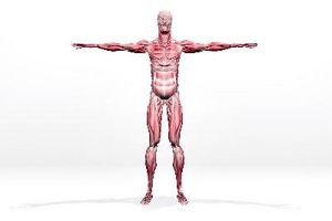 Symptomene på Torn muskelvev