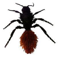 Bitende Bugs som ser ut som maur i Georgia
