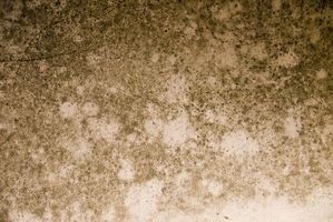 Testing for Black Mold