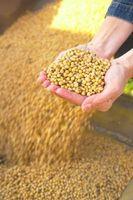 Grain Processing Metoder for å tjene Food Products