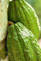 Hva er Papaya Fruit godt for?