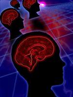 Hjernen og stadier av utviklingen i et barn