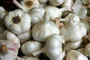 Hvordan bruke hvitløk som et antibiotikum