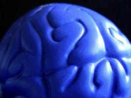 Menneskelige hjerne Fakta for Kids