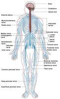 Homeopatiske Nerverettsmidler