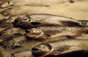 Er Fish Oil Okay for Kids?