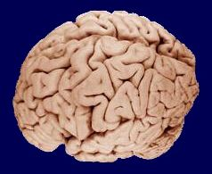Ernæring for hjernen