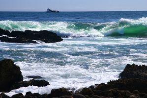 Effekten av oljesøl på Marine Life